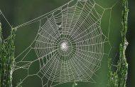 Apakah Hukum Sarang Laba-laba Itu Najis