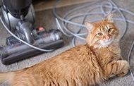 Bagaimana Cara Menghilangkan / Menyucikan Benda Yang Terkena Kencing Kucing